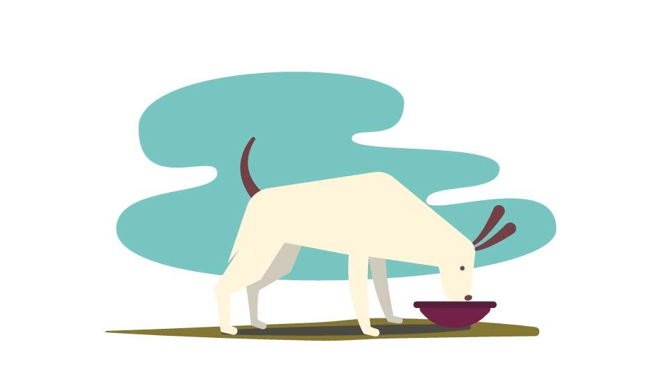 verum alimento fresco per cani