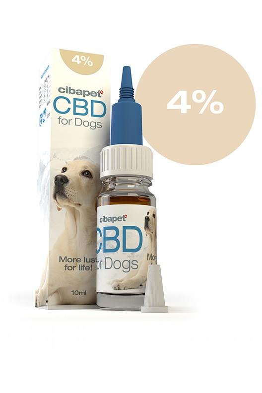 cbd-oil-for-dogs