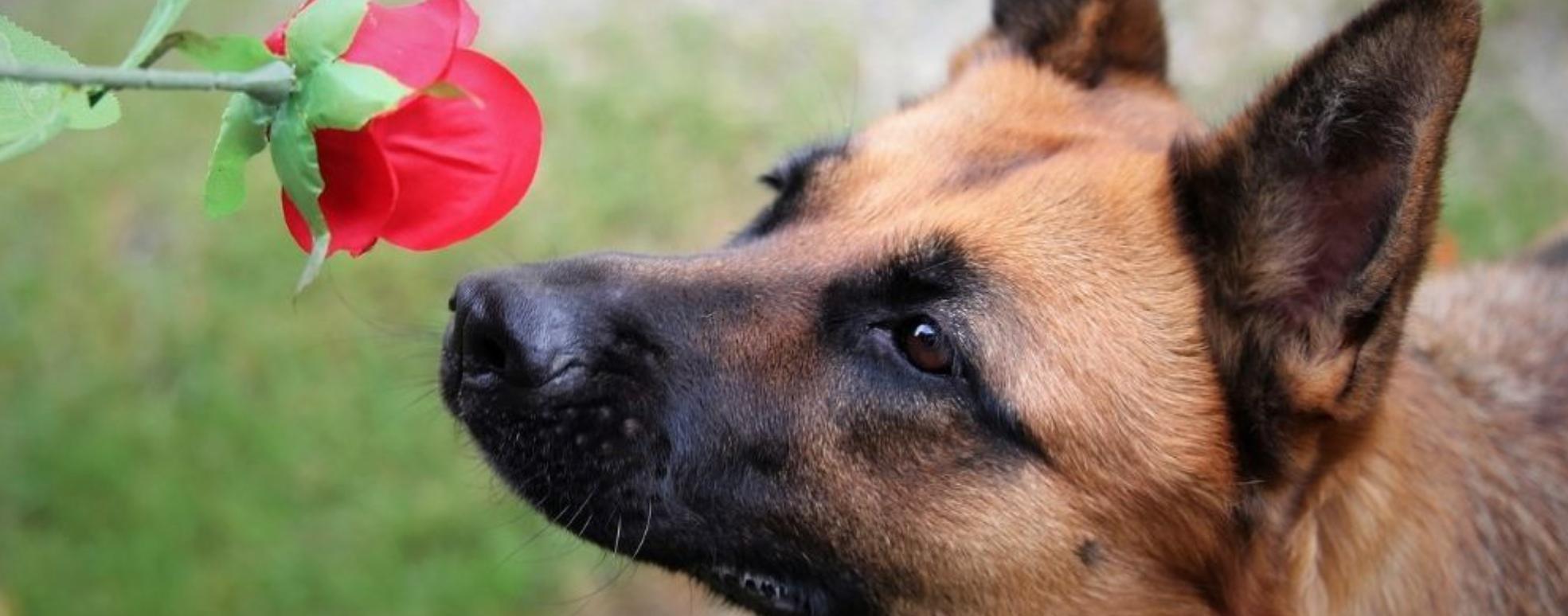 Il senso dell'olfatto nei cani
