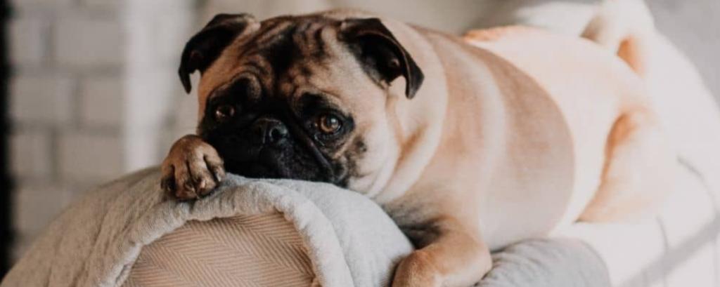 alimentazione cane sterilizzato