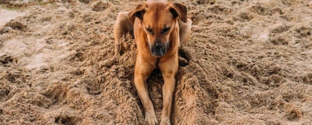 giochi cane sulla spiaggia